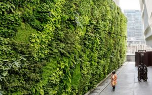 Photo of The Living Wall at SFMOMA